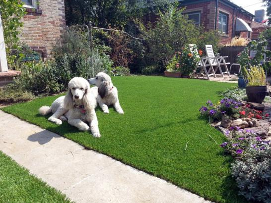 Artificial Grass Photos: Fake Lawn Buchanan, Michigan Drainage, Landscaping Ideas For Front Yard