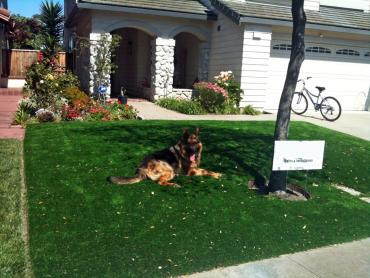 Artificial Grass Photos: Fake Turf Sterling Heights, Michigan Roof Top, Dogs Runs