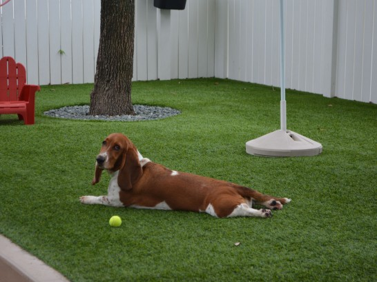 Artificial Grass Photos: Outdoor Carpet Athens, Michigan Grass For Dogs, Dogs
